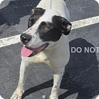 Adopt A Pet :: Dolly - Rocky Mount, NC