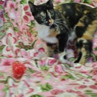 Adopt A Pet :: Dinah - Thomasville, GA
