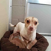 Adopt A Pet :: ELENOR - Fairfield, CA