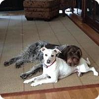 Adopt A Pet :: Sadie - Naugatuck, CT