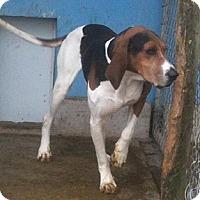 Adopt A Pet :: Perry - Schererville, IN