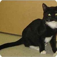Adopt A Pet :: Bandit - Jenkintown, PA