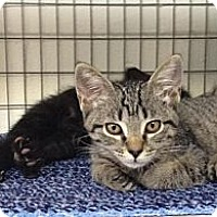 Adopt A Pet :: Gertie & Riley - Winter Haven, FL