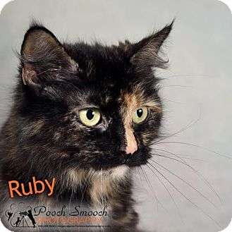 Domestic Mediumhair Cat for adoption in Broadway, New Jersey - Ruby