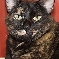 Adopt A Pet :: Cleopatra - Savannah, MO