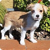 Adopt A Pet :: Hannagan - Gilbert, AZ