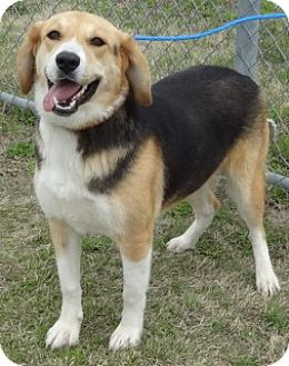 Foxhound Mix Dog for adoption in Olive Branch, Mississippi - Lily