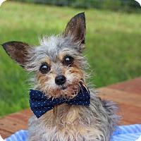 Adopt A Pet :: Binx - Fort Valley, GA
