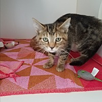 Adopt A Pet :: Marlin - Indianapolis, IN