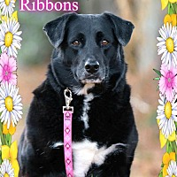 Adopt A Pet :: Ribbons - New Castle, DE