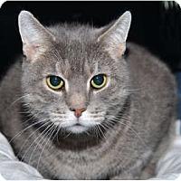 Adopt A Pet :: Sheila - New York, NY