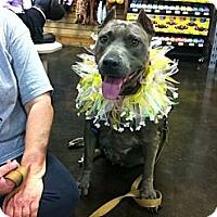 Adopt A Pet :: Cameo - Blanchard, OK