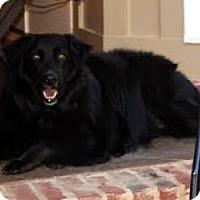 Adopt A Pet :: Hendrix - New Canaan, CT