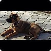 Adopt A Pet :: Baby Kaluha - Marlton, NJ