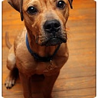 Adopt A Pet :: Howie - ADOPTED! - Sterling Heights, MI