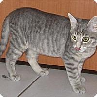 Adopt A Pet :: Precious FOSTER NEEDED - Lafayette, CA