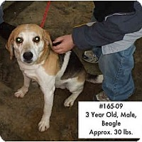 Adopt A Pet :: # 165-09 @ Animal Shelter - Zanesville, OH