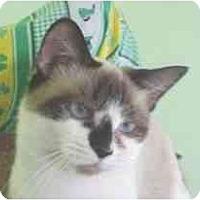 Adopt A Pet :: Gracie - Lunenburg, MA