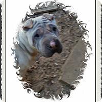 Adopt A Pet :: Stardust - Houston, TX
