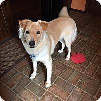 Adopt A Pet :: Appleby - MEET HIM - Norwalk, CT