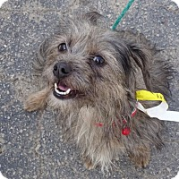 Adopt A Pet :: Kinsley - Delaware, OH