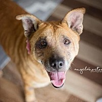 Adopt A Pet :: Minerva - Burlington, NC