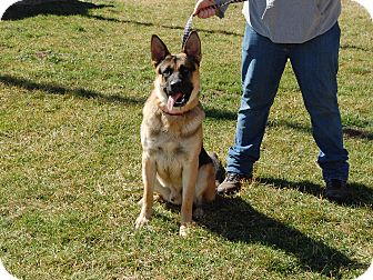 German Shepherd Dog Dog for adoption in North Judson, Indiana - Max