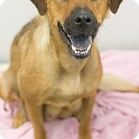 Adopt A Pet :: Maria - Downingtown, PA