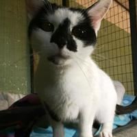 Adopt A Pet :: Chrissy - Salem, OH