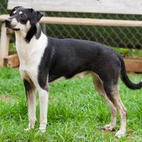 Mixed Breed (Medium) Mix Dog for adoption in Cartersville, Georgia - Chevy
