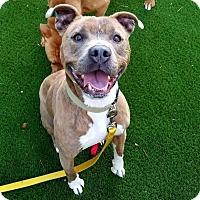 Adopt A Pet :: Java - Raleigh, NC