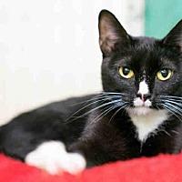 Adopt A Pet :: NEVE - Norfolk, VA
