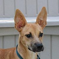 Adopt A Pet :: Brittney - Yardley, PA