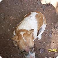 Adopt A Pet :: Muffin - Wedowee, AL