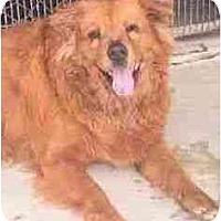 Adopt A Pet :: Honey - Miami Beach, FL