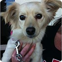 Adopt A Pet :: Peaches - Lake Forest, CA