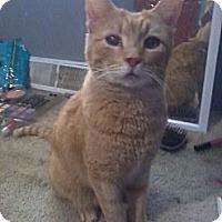 Adopt A Pet :: Simba - Port Republic, MD