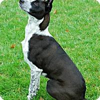 Adopt A Pet :: Bijou - Delano, MN