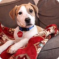 Adopt A Pet :: Sherman - Fenton, MI