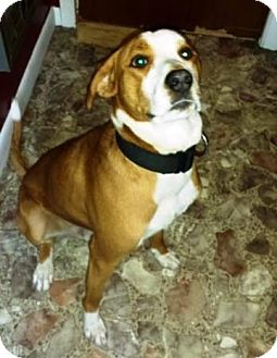 Boxer Mix Dog for adoption in Dover, Tennessee - CHAMP