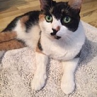 Adopt A Pet :: Amber/GREAT WITH CATS/Funny - Bryn Mawr, PA