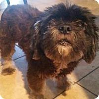 Adopt A Pet :: Joan - San Antonio, TX
