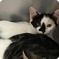 Adopt A Pet :: Doodle - East Brunswick, NJ