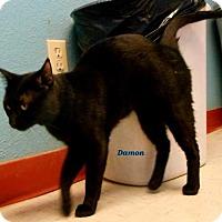Adopt A Pet :: Damon - Oskaloosa, IA