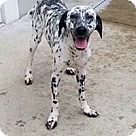 Adopt A Pet :: Folly/Bella