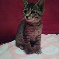 Adopt A Pet :: Eenie - Millersville, MD
