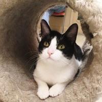 Adopt A Pet :: Selena - Oak Park, IL
