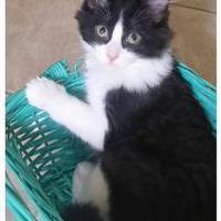 Adopt A Pet :: Zorro - Williamsport, PA