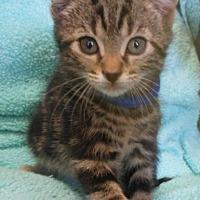 Adopt A Pet :: Van - Reston, VA