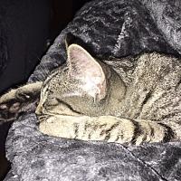 Adopt A Pet :: Fred - Phillipsburg, NJ
